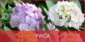 YWCA_1